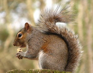 10027-close-up-of-a-squirrel-eating-a-nut-pv